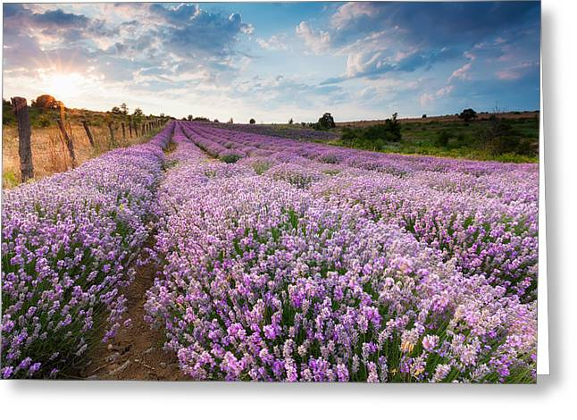 Bulgaria Greeting Cards - Sunny Lavender Greeting Card by Evgeni Dinev