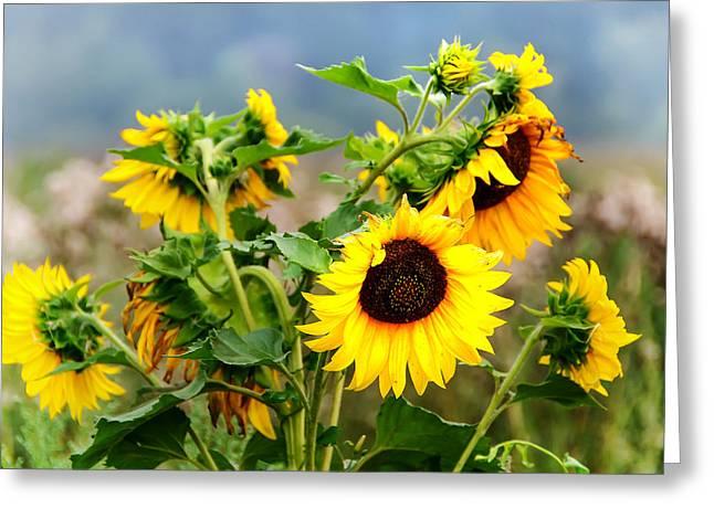 Sunny Meadow Greeting Card by Jenny Rainbow