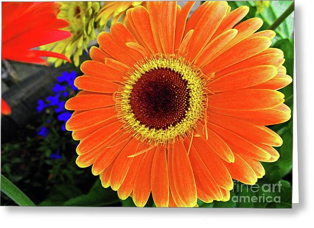Apricot Digital Art Greeting Cards - Sunny Greeting Card by Molly McPherson