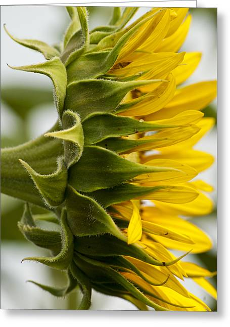 Featured Art Greeting Cards - Sunny Side Greeting Card by Christi Kraft