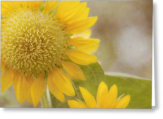 Sunny Side Up Greeting Card by Kim Hojnacki