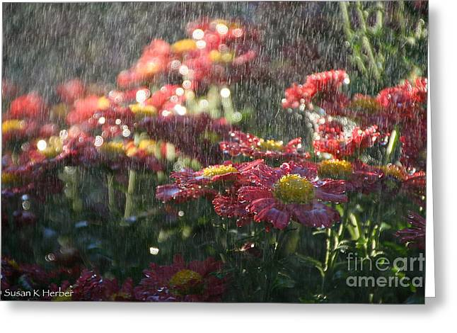Blooms Greeting Cards - Sunny Soaker Greeting Card by Susan Herber
