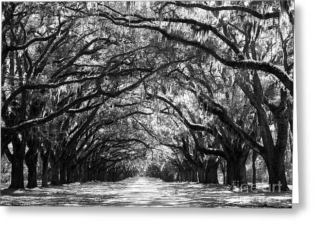 Sunny Southern Day - Black And White 24 X 18 Greeting Card by Carol Groenen