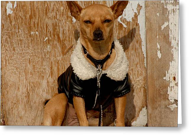 Doggy Dress Greeting Cards - Sunny Spot. Greeting Card by Art Block Collections