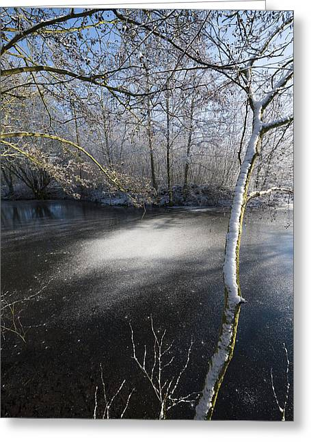 Snowy Stream Greeting Cards - Sunny Spot Greeting Card by Svetlana Sewell