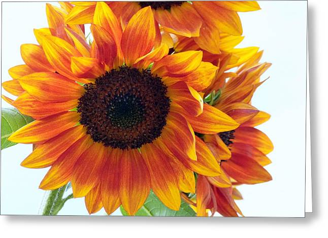 Sunflower Patch Greeting Cards - Sunny Sunflower Greeting Card by Lou Sisneros