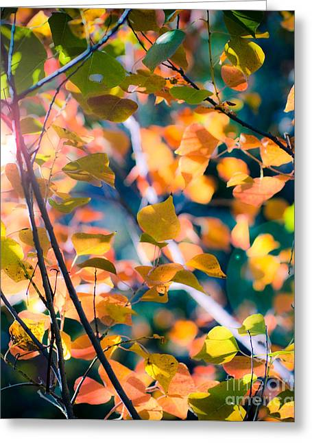 Sonja Quintero Greeting Cards - Sunny Yellow Leaves Greeting Card by Sonja Quintero