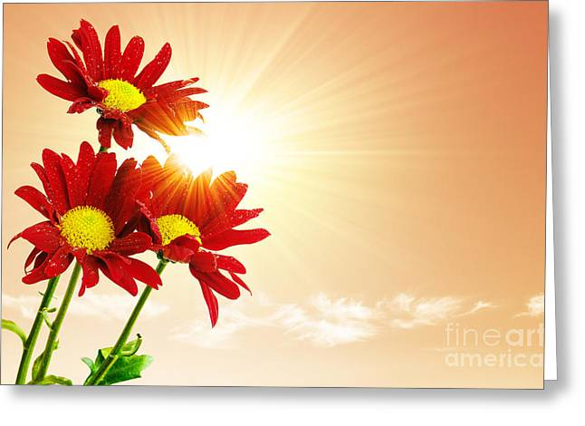 Sunnies Greeting Cards - Sunrays Flowers Greeting Card by Carlos Caetano