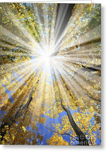 Shining Light Greeting Cards - Sunrays in the forest Greeting Card by Elena Elisseeva