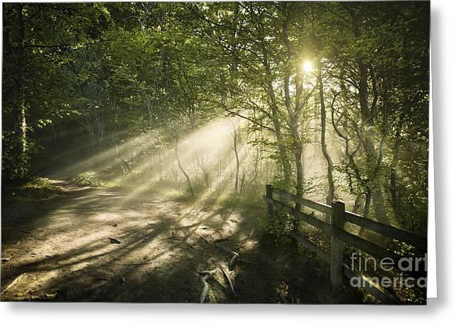 Emergence Greeting Cards - Sunrays Shining Through A Dark, Misty Greeting Card by Evgeny Kuklev