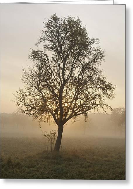 Sunrise And Beautiful Tree Greeting Card by Matthias Hauser