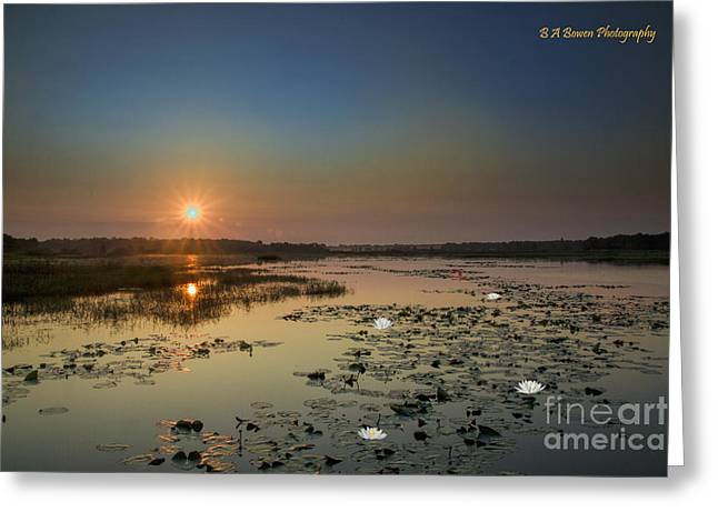 Pasco County Greeting Cards - Sunrise and Water Lilies Greeting Card by Barbara Bowen