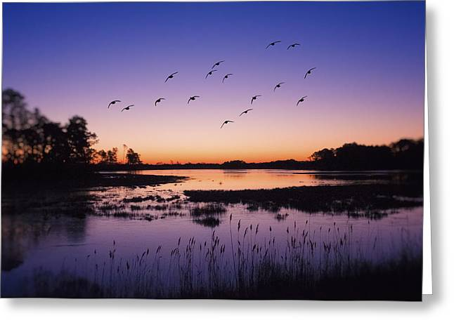 Pink Sunset Greeting Cards - Sunrise At Assateague - Wetlands - Silhouette  Greeting Card by Sharon Norman