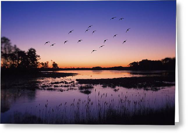 Dusk Greeting Cards - Sunrise At Assateague - Wetlands - Silhouette  Greeting Card by Sharon Norman