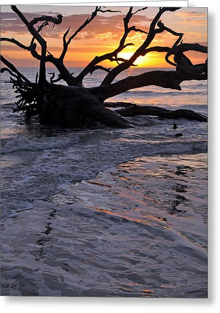 Beach Photograph Greeting Cards - Sunrise at Driftwood Beach 6.3 Greeting Card by Bruce Gourley