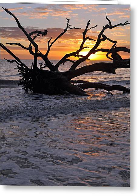 Beach Photographs Greeting Cards - Sunrise at Driftwood Beach 6.4 Greeting Card by Bruce Gourley