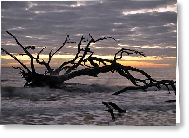 Beach Photograph Greeting Cards - Sunrise at Driftwood Beach 6.5 Greeting Card by Bruce Gourley
