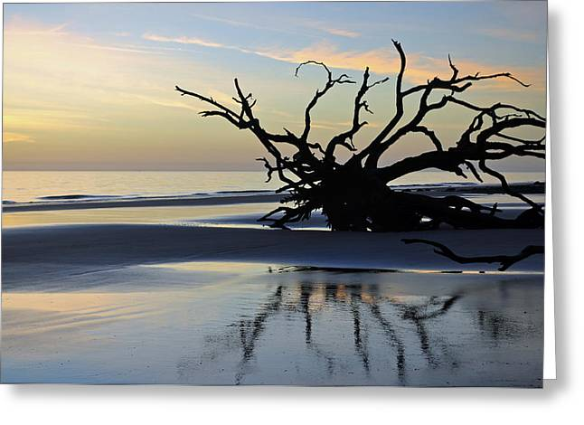 Beach Photograph Greeting Cards - Sunrise at Driftwood Beach 6.6 Greeting Card by Bruce Gourley