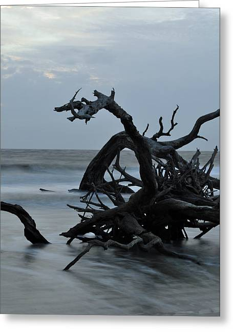Beach Photographs Greeting Cards - Sunrise at Driftwood Beach 6.7 Greeting Card by Bruce Gourley
