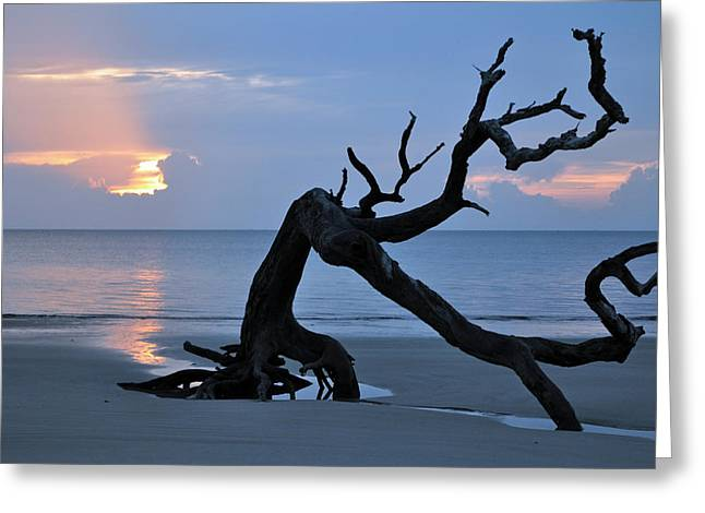 Beach Photograph Greeting Cards - Sunrise at Driftwood Beach 7.1 Greeting Card by Bruce Gourley