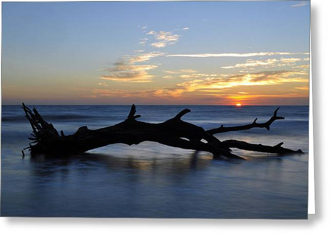 Beach Photographs Greeting Cards - Sunrise at Driftwood Beach 7.2 Greeting Card by Bruce Gourley
