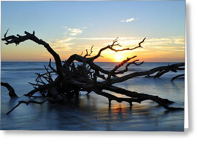 Beach Photograph Greeting Cards - Sunrise at Driftwood Beach 7.4 Greeting Card by Bruce Gourley