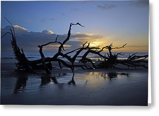 Beach Photograph Greeting Cards - Sunrise at Driftwood Beach 7.5 Greeting Card by Bruce Gourley