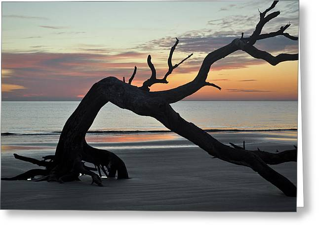 Beach Photographs Greeting Cards - Sunrise at Driftwood Beach 7.6 Greeting Card by Bruce Gourley