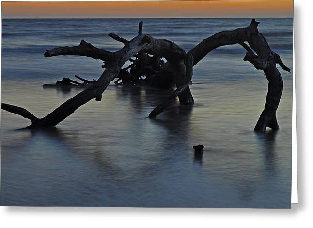 Beach Photograph Greeting Cards - Sunrise at Driftwood Beach 7.7 Greeting Card by Bruce Gourley