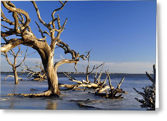 Beach Photograph Greeting Cards - Sunrise at Driftwood Beach 7.9 Greeting Card by Bruce Gourley