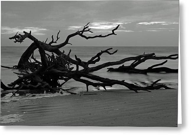 Beach Photographs Greeting Cards - Sunrise at Driftwood Beach BW Greeting Card by Bruce Gourley