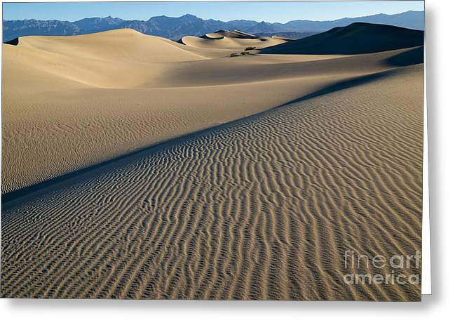 Polygon Greeting Cards - Sunrise at Mesquite Flat Sand Dunes Greeting Card by Sandra Bronstein