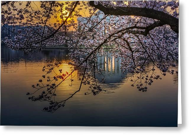 Capitol Flowers Greeting Cards - Sunrise At The Thomas Jefferson Memorial Greeting Card by Susan Candelario