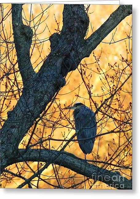 Recently Sold -  - Water Fowl Greeting Cards - Sunrise by James Figielski Greeting Card by Paulinskill River Photography