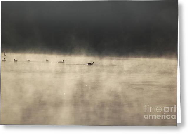 Recently Sold -  - Duo Tone Greeting Cards - Sunrise Geese Greeting Card by Melissa Petrey