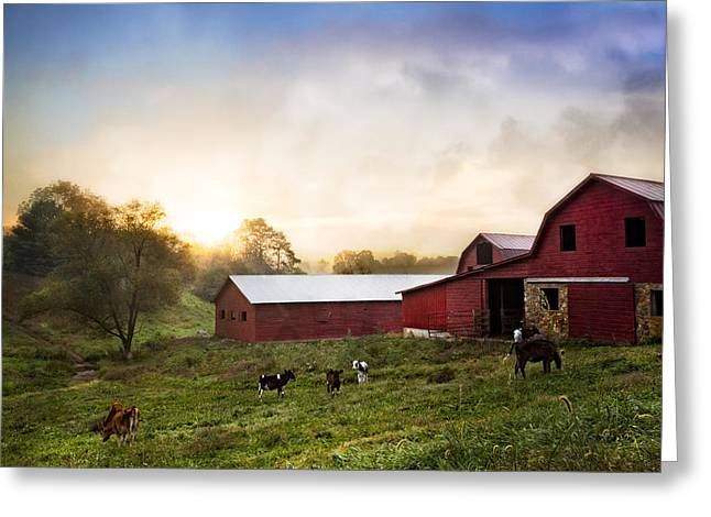 Tennessee Barn Greeting Cards - Sunrise Grazing Greeting Card by Debra and Dave Vanderlaan