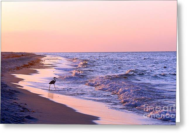 Recently Sold -  - Sunset Framed Prints Greeting Cards - Sunrise in Perdido Greeting Card by Tina Miller
