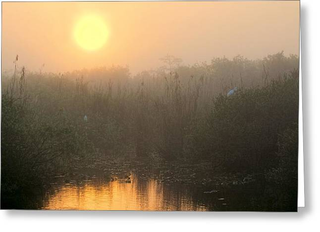 Mystical Landscape Greeting Cards - Sunrise in the Everglades Greeting Card by Rudy Umans