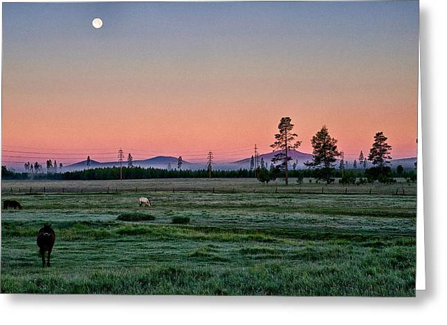 Sunrise Greeting Cards - Sunrise in the Meadow Greeting Card by Cat Connor