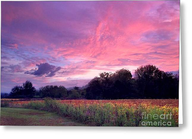 Reflection Harvest Greeting Cards - Sunrise in the South Greeting Card by T Lowry Wilson