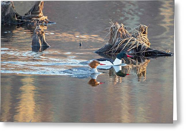 Sunrise In The Swamp Greeting Card by Bill Wakeley