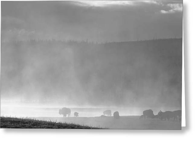 Fog Rising Greeting Cards - Sunrise In Yellowstone Greeting Card by Dan Sproul