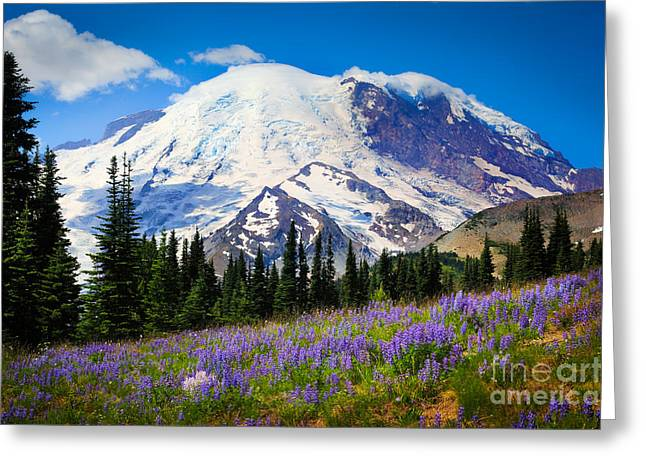 Snow Blossom Greeting Cards - Sunrise Lupines Greeting Card by Inge Johnsson