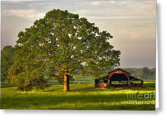 Red Roofed Barn Greeting Cards - Sunrise Oak and The Red Barn Greeting Card by Reid Callaway