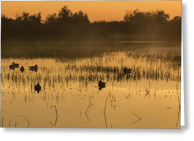 Pasttime Greeting Cards - Sunrise on the Duck Pond Greeting Card by Jean Noren