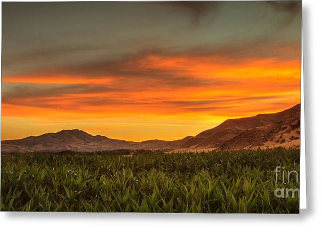 Bale Greeting Cards - Sunrise Over A Corn Field Greeting Card by Robert Bales