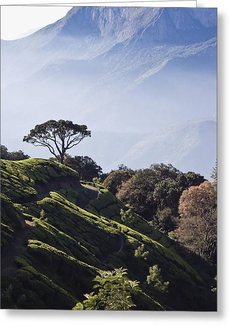 Hill Station Greeting Cards - Sunrise Over The Majestic Western Ghats Greeting Card by Heather Elton