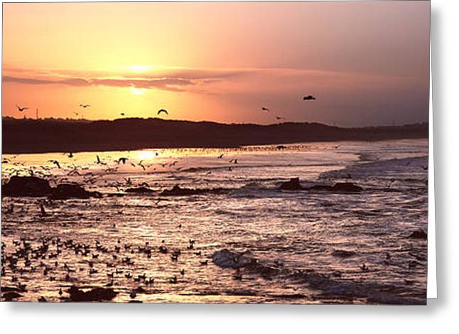 Flying Animal Greeting Cards - Sunrise Over The Plouharnel Beach Greeting Card by Panoramic Images