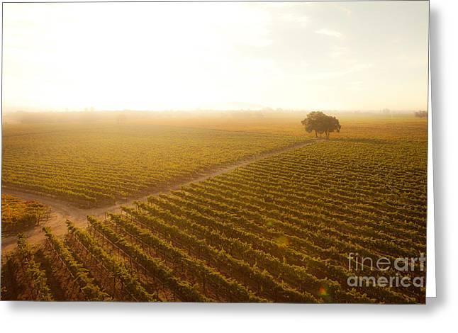 Grape Vineyard Greeting Cards - Sunrise Over the Vineyard Greeting Card by Diane Diederich