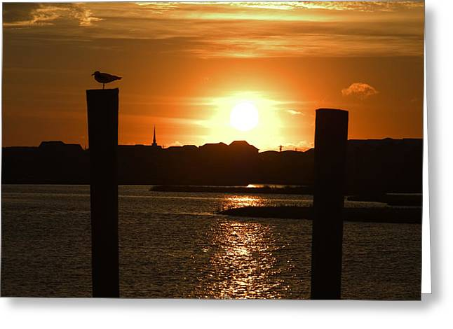 Sea Gulls Greeting Cards - Sunrise Over Topsail Island Greeting Card by Mike McGlothlen
